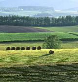 乾牧草について